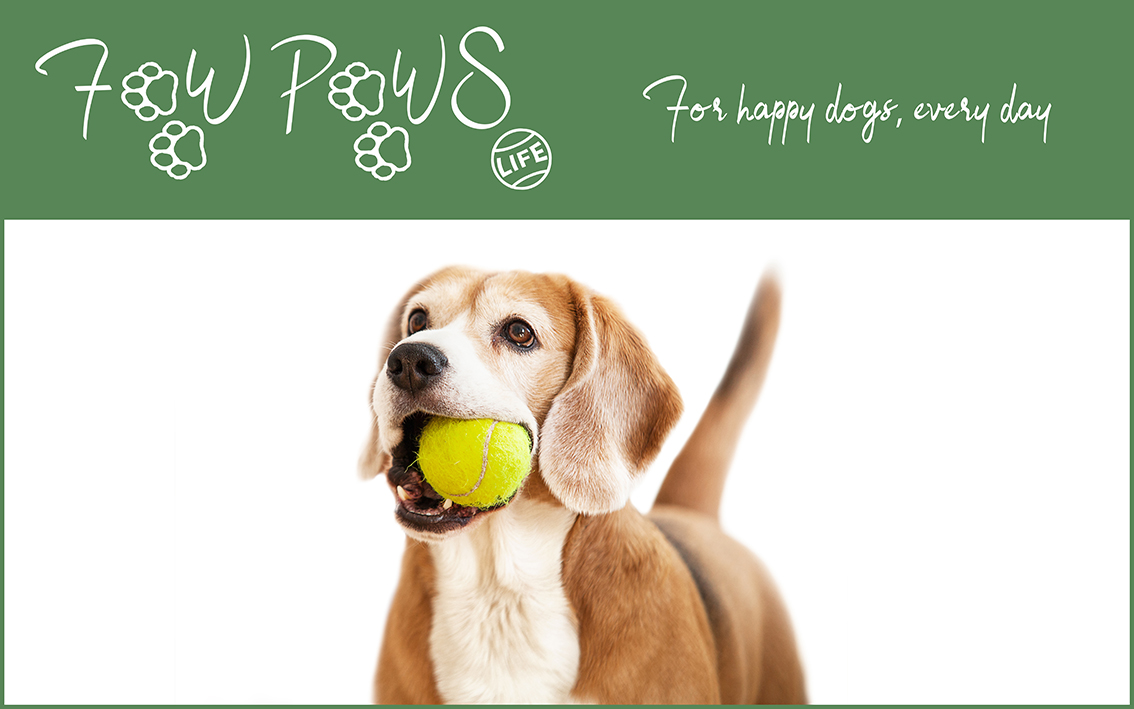Life | Dog toys and accessories